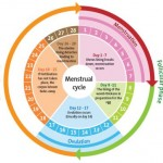 master-cleanse-menstruation-cycle