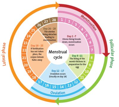 Herbs for Health: Remedies for Menstrual Problems