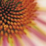 detox-diet-flower